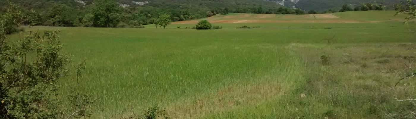 Campos verdes de trigo bajo el sol de primavera, al fondo se alza la montaña
